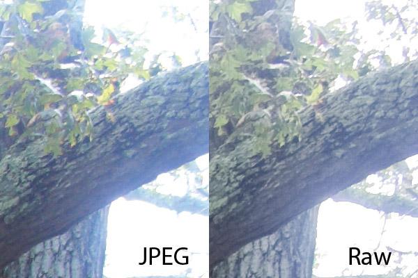 تفاوت فاحش فرمت های فایل RAW و JPEG را مشاهده کنید